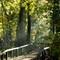 Yarrow Valley trees Nov13