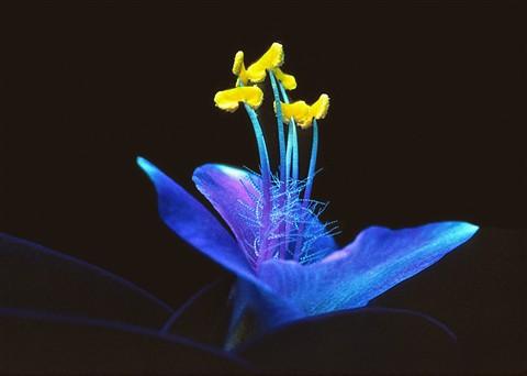 Blue Flower challenge