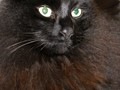 Ann's cat