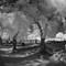 IR Fisheye Cemetary Trees