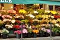 aquarelle des fleurs