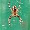 spider 011