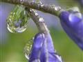 Raindrop worlds