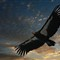 Condor Sails