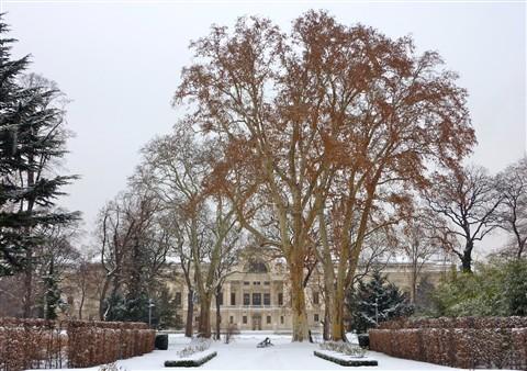 palais-liechtenstein-linde
