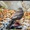 sparrow hawk 1