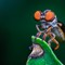 Hococephala sp. (fusca?) Robberfly.