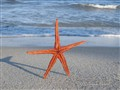 STARFISH ... GETTING A TAN