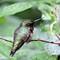 P600 Hummingbird grab shot