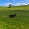 Sheepherder_alpine pasture-1