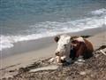 Capizollu Beach