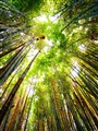 The view from under the bamboo