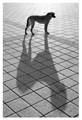 IMG_5368 - Stray Dog