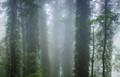 Dorrigo National Park NSW Australia