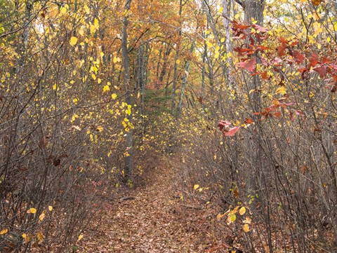 Path in the Fells