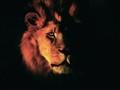 Leo Panthera