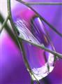 Purple raindrop.