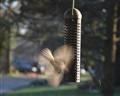 chichadee at bird feeder