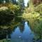 Lily Pond (DSC_0950)