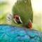 Jax-Zoo-Bird-ISO-1250
