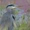 Ridgefield Heron