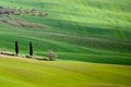 Lonely cypress trees and rolling hills, Tuscany, Italy