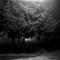 Susurrating-Spruce