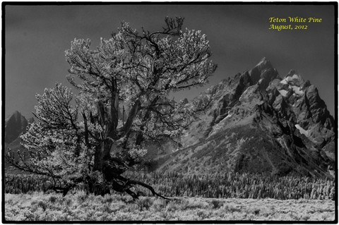 ir_teton_range_1-31-Edit