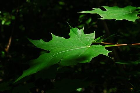 leavestbf