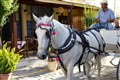 Horse and Buggy on Crete