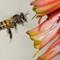Bee Slow sync bright light