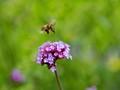 Bee - landing