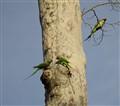parrots' talk