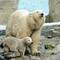Ice bear with kid_2