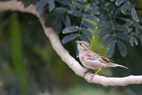 birds 018f