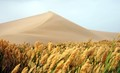 Tall Grass and Sand