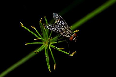 fresh fly (2)