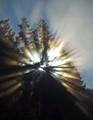 Pacific Northwest Sunburst