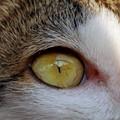 nok's eye