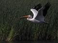 wood pelican2