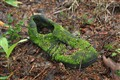 Forest boot