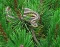 Garter snake , DSC01899