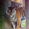 Tiger-033511