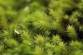 Sparkling moss 3