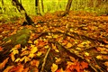 autumn cape breton