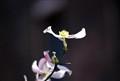 Dancing_Flower