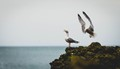 Seagull social distancing
