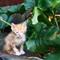 KittenLeaf