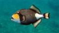 Fish Vanuatu
