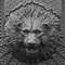 C-lionhead-Zone8